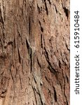 Small photo of Brown tile-able texture of the old tree. Tree bark of pine tree.