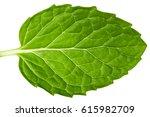 fresh herb leaf. mint leaves...   Shutterstock . vector #615982709