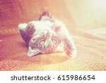 Stock photo small striped kitten basking on the couch at home 615986654