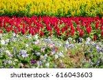 flower garden at christmas... | Shutterstock . vector #616043603
