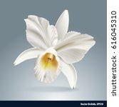 vector of orchid flower ... | Shutterstock .eps vector #616045310