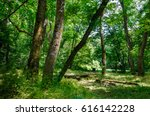 Small photo of Forest. May forest.