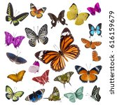 Stock photo set of butterflies isolated on white background 616159679