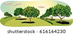 orchard with pear trees. | Shutterstock .eps vector #616164230