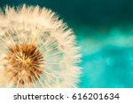Dandelion Flower With Seeds...