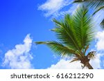 Palm Trees And Blue Sky...