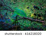 duckweed and lotus leaf on the... | Shutterstock . vector #616218320