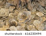 artificial dried rose made of... | Shutterstock . vector #616230494