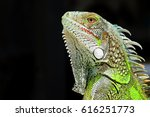 green iguana profile detail... | Shutterstock . vector #616251773