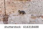Small photo of Alleycat standing in front of a ruined brick wall