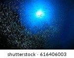 Sardines Fish With Mackerels...