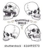 anatomical skulls vector set.... | Shutterstock .eps vector #616493573