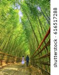 lovers take a walk in bamboo...   Shutterstock . vector #616517288