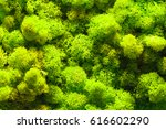 green texture of fresh vibrant... | Shutterstock . vector #616602290
