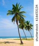Coconut Tree On The Sky...