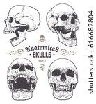 anatomical skulls vector set.... | Shutterstock .eps vector #616682804