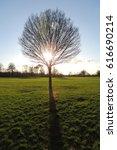 a tree in a field near windsor... | Shutterstock . vector #616690214