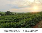 plantation   sundown on the... | Shutterstock . vector #616760489