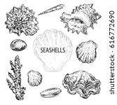 hand drawn set seashells | Shutterstock .eps vector #616772690