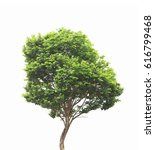 tree isolated on white... | Shutterstock . vector #616799468