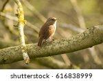wren | Shutterstock . vector #616838999