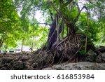 root rain forest | Shutterstock . vector #616853984