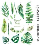 tropical leafy collection.... | Shutterstock . vector #616892474