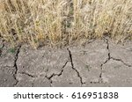 The Earth Was Cracked By Drought