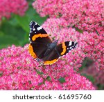 Colorful Red Admiral Butterfly...