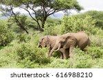elephants in lake manyara... | Shutterstock . vector #616988210