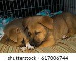 puppies sleeping   Shutterstock . vector #617006744