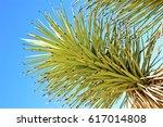 Joshua Tree Branch