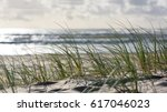 Screensaver Close Up Of Green Grass Vegetation (Ammophilia) On A Sandy Dune Beach During Sunrise, Currumbin Beach, Gold Coast, Queensland, Australia