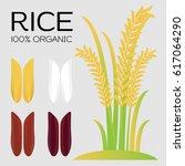 rice grains. vector illustration | Shutterstock .eps vector #617064290