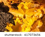 Texture Of Autumn Leaves....