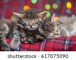 Stock photo cute sleeping kittens 617075090