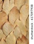 closeup detail of dried...   Shutterstock . vector #617097938