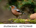 in the finch sitting on a tree... | Shutterstock . vector #617124668