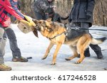 Police Shepherd Dog Attacks An...