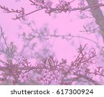 branch of a blossoming cherry... | Shutterstock . vector #617300924