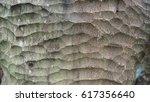 tree trunk texture | Shutterstock . vector #617356640