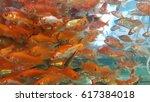 comet goldfish  | Shutterstock . vector #617384018