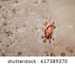 red mangrove crab on sea water... | Shutterstock . vector #617389370