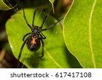 black widow spider | Shutterstock . vector #617417108