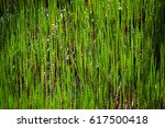 the shining green texture of a... | Shutterstock . vector #617500418