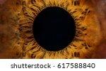 beautiful brown human eye very... | Shutterstock . vector #617588840