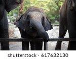 A Little Elephant Zoo - Fine Art prints