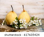 Yellow Pears And Pear Flowers...