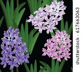 hyacinth plant  spring flower ... | Shutterstock . vector #617663063