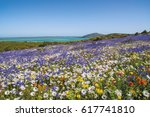 a carpet of flowers cover the... | Shutterstock . vector #617741810